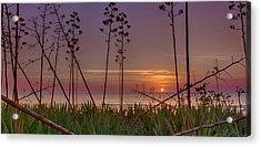 Sunrise Palm Blooms Acrylic Print