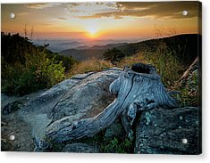 Sunrise Stump Acrylic Print