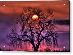 Sunrise Through The Foggy Tree Acrylic Print by Scott Mahon