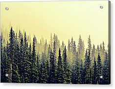 Sunrise Through The Pines Acrylic Print