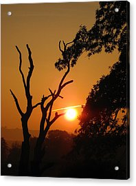 Sunrise Trees Acrylic Print by RKAB Works