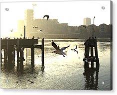 Sunrise With Seagulls Acrylic Print