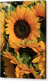 Suns And Brothers Acrylic Print by Alan Rutherford