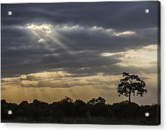 Sunset Africa 2 Acrylic Print by Kathy Adams Clark