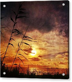 Sunset Among The Reeds #sunset Acrylic Print