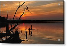 Acrylic Print featuring the photograph Sunset And Heron by Angel Cher