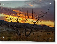 Sunset And Petrified Tree Acrylic Print by David Gn