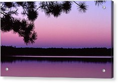 Acrylic Print featuring the photograph Sunset And Pine 2 by Lyle Crump