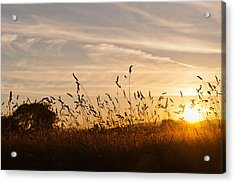 Sunset And Wheat Field Acrylic Print