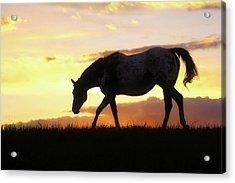 Sunset Appy Acrylic Print