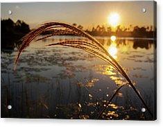 Sunset At Gator Hole 2 Acrylic Print