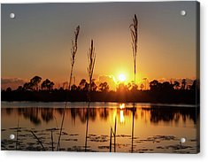 Sunset At Gator Hole 3 Acrylic Print by Arthur Dodd