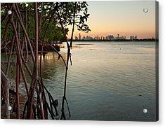 Sunset At Miami Behind Wild Mangrove Forest Acrylic Print by Matt Tilghman