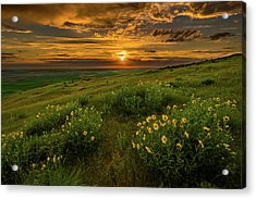Sunset At Steptoe Butte Acrylic Print