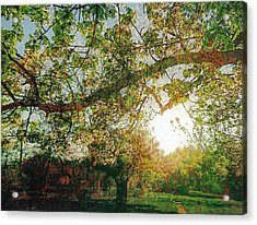Acrylic Print featuring the photograph Sunset  by Bee-Bee Deigner