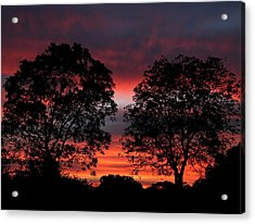 Sunset Behind Two Trees Acrylic Print