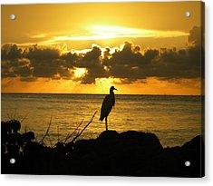 Sunset Bird Acrylic Print