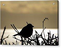 Sunset Bird Silhouette Acrylic Print