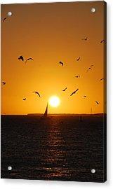 Sunset Birds Key West Acrylic Print by Susanne Van Hulst