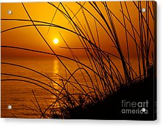 Sunset Acrylic Print by Carlos Caetano