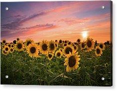 Sunset Choir Acrylic Print