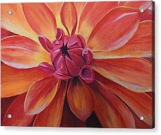 Sunset Dahlia Acrylic Print