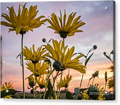 Sunset Delight Acrylic Print
