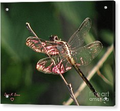 Acrylic Print featuring the photograph Sunset Dragonfly by Donna Brown