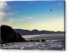 Sunset Eagle Acrylic Print by Jon Burch Photography