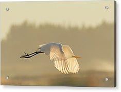 Sunset Egret Acrylic Print
