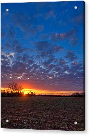 Sunset Field Acrylic Print