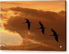 Sunset Flight Acrylic Print