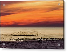 Sunset Flock Acrylic Print