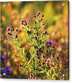 Acrylic Print featuring the photograph Sunset Flowers by Christina Rollo