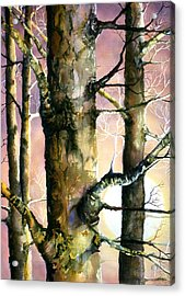 Sunset Forest Acrylic Print by Connie Williams
