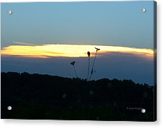 Sunset Gold Stripe Queen Anne Acrylic Print