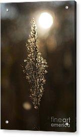 Sunset In Autumn Acrylic Print by Hideaki Sakurai