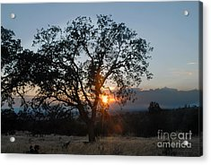 Sunset In Chico Acrylic Print by Richard Verkuyl