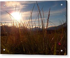 Sunset In Grass Acrylic Print by Sidsel Genee