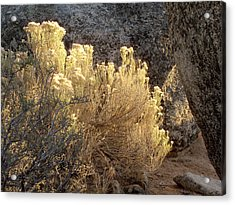Sunset In The Rabbitbrush Lake Tahoe Sierra Nevada Larry Darnell Acrylic Print