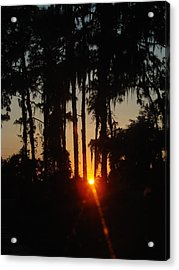 Sunset In The Woods Acrylic Print by Kimberly Camacho
