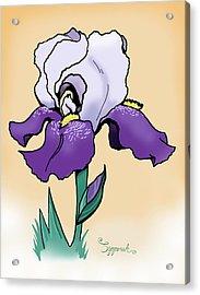 Sunset Iris Acrylic Print
