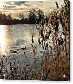 Sunset Lake  Acrylic Print by Kathy Spall