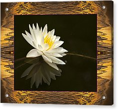 Sunset Lily Acrylic Print by Bell And Todd