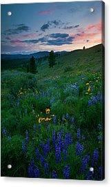 Sunset Meadow Trail Acrylic Print by Mike  Dawson