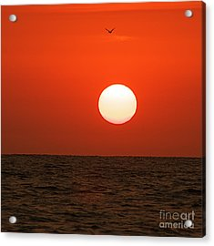 Acrylic Print featuring the photograph Sunset by Nicola Fiscarelli