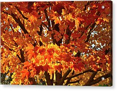 Acrylic Print featuring the photograph Sunset On Sugar Maple by Ray Mathis