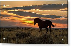 Sunset On The Mustang Acrylic Print by Jack Bell