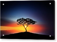 Sunset On The Tree Acrylic Print by Bess Hamiti
