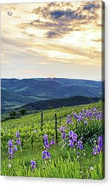 Sunset Over Chianti With Iris Acrylic Print